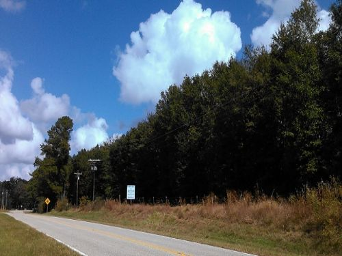 Ready Homesite And Hunting Land : Banks : Pike County : Alabama