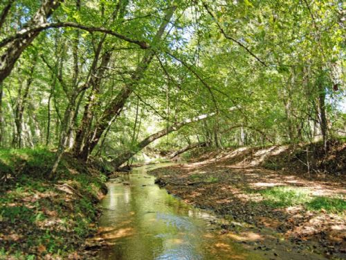 197.4 Acres For Hunting Enthusiasts : Union : South Carolina