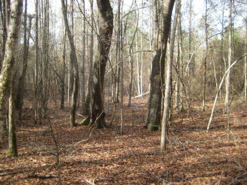 Smith Creek Tract : Wrightsville : Johnson County : Georgia