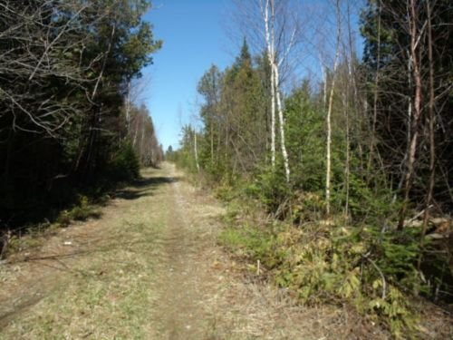Secluded Hunting Camp : Rogers City : Presque Isle County : Michigan