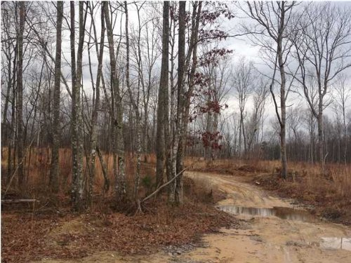 Bank Owned 53.88+/- Acres $59,268 : Tracy City : Grundy County : Tennessee