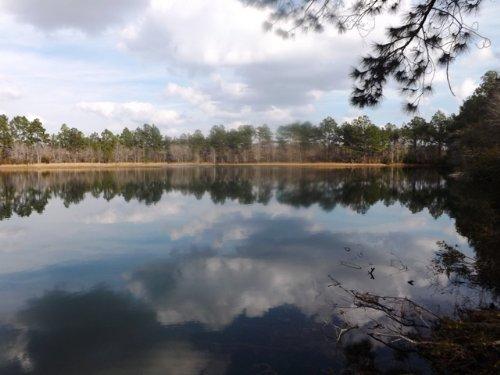 Bucks And Bottoms : Swainsboro : Emanuel County : Georgia