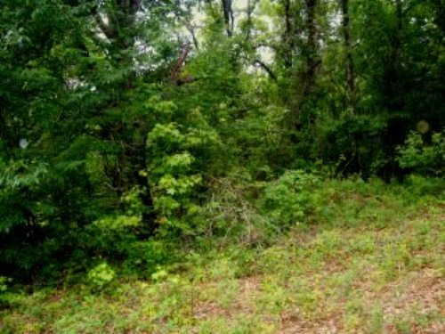 12.43 +/- Acres : Troy : Pike County : Alabama