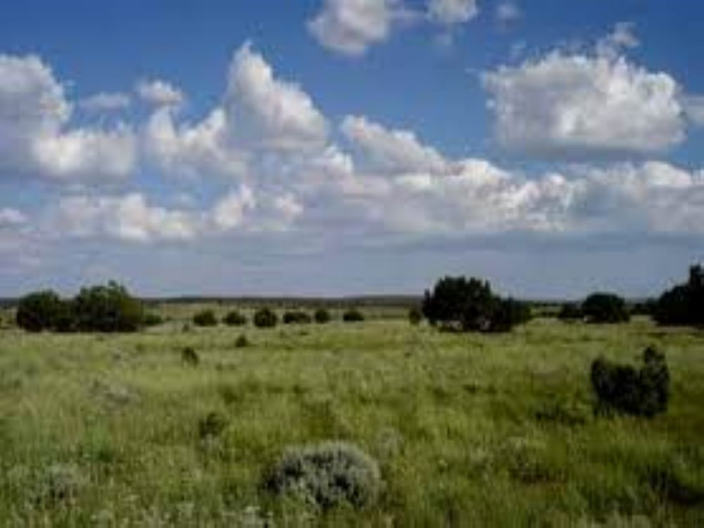 Snowflake Arizona Ranch Foreclosure : Snowflake : Navajo County : Arizona