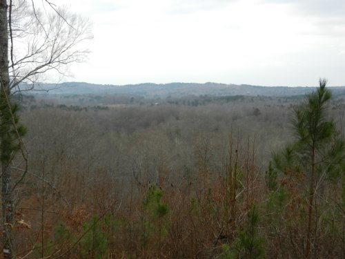 40+/- Acres Bluff Valley Road : Ashland : Clay County : Alabama