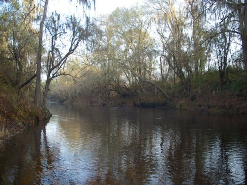 Alapaha River Tract : Statenville : Echols County : Georgia