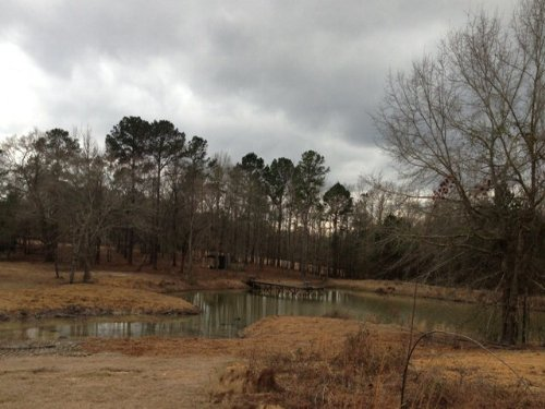 12.5+/- Acres With Pond : Banks : Pike County : Alabama