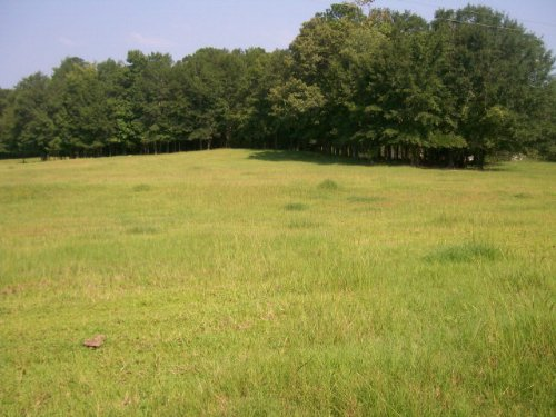 23+/- Ac  With A Small Pond : Banks : Pike County : Alabama