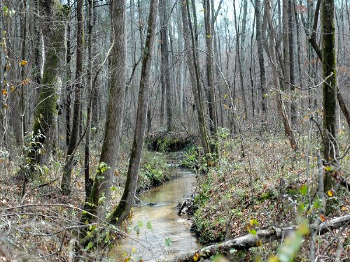 Bank Owned 173+- Acres Walnut Grove : Walnut Grove : Walton County : Georgia