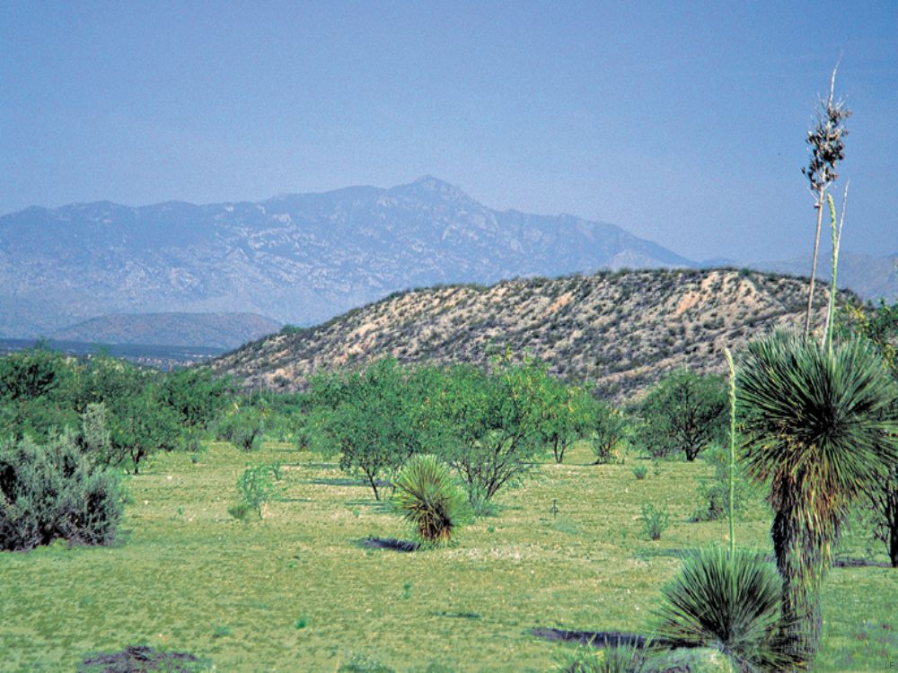 San Pedro Ranch : Benson : Cochise County : Arizona