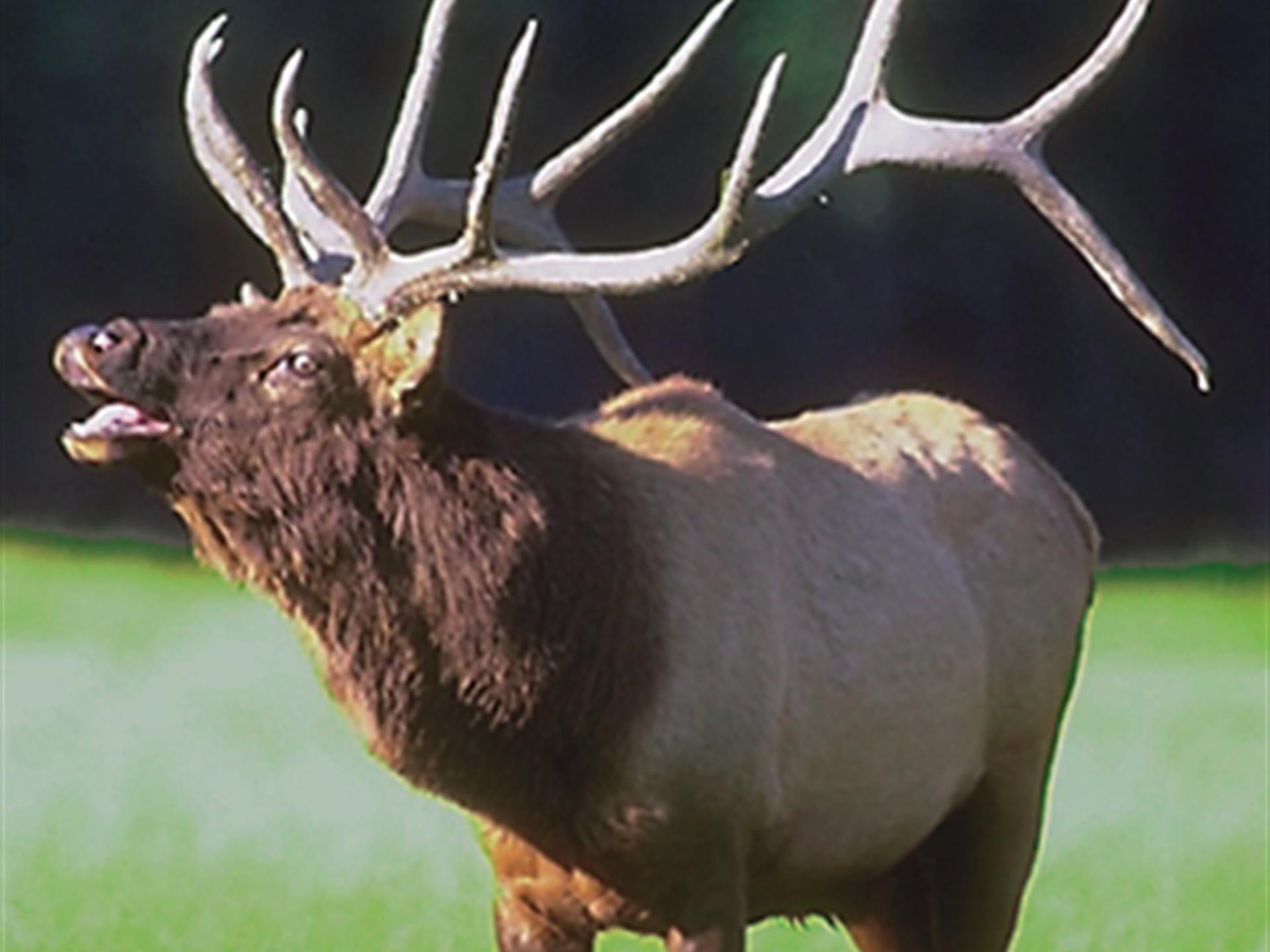 Elk Valley 40 Acre Foreclosure : Ranch for Sale : Saint Johns : Apache  County : Arizona