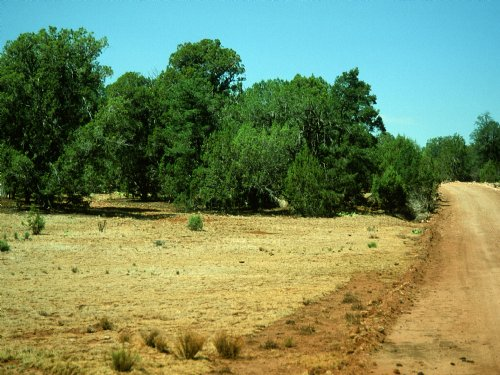 Elk Valley Ranch, Arizona 36 Acres : Saint Johns : Apache County : Arizona