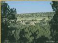 Elk Valley Ranch, Arizona 36 Acres in Apache County, Arizona