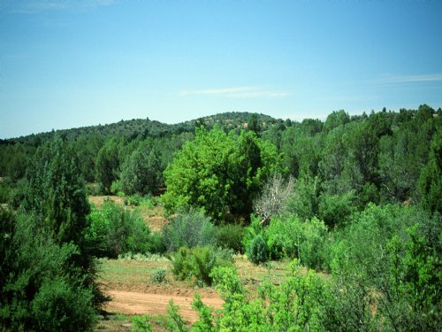 Woodland Valley Ranch Arizona 768 : Saint Johns : Apache County : Arizona