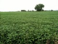 80 Acres : Madison : Lac qui Parle County : Minnesota