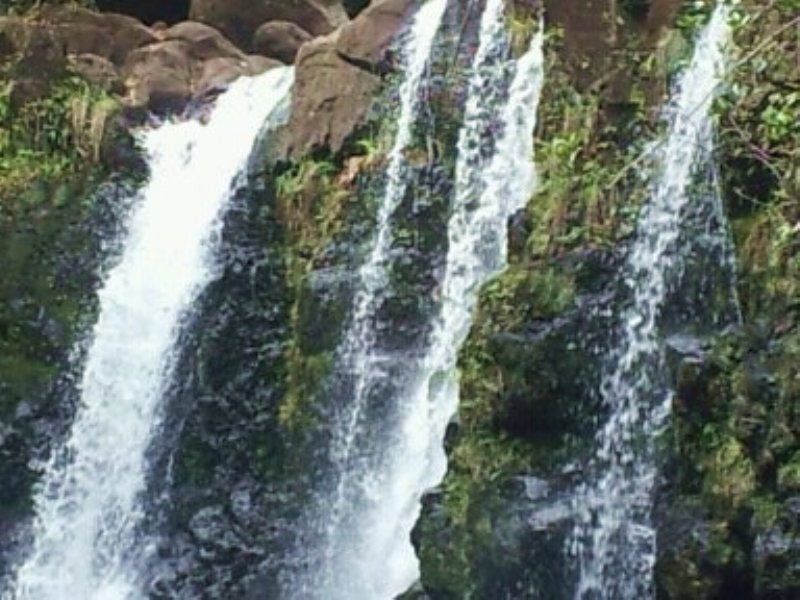 Rare Timber,Water Falls Ocean View : Hilo : Hawaii County : Hawaii
