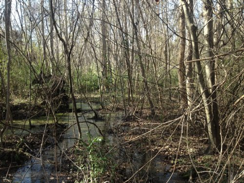 17.26 Acres - Sumter : Sumter : South Carolina