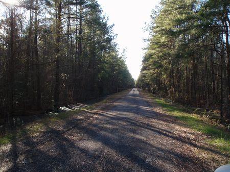 Great Hunting : Clarkton : Bladen County : North Carolina