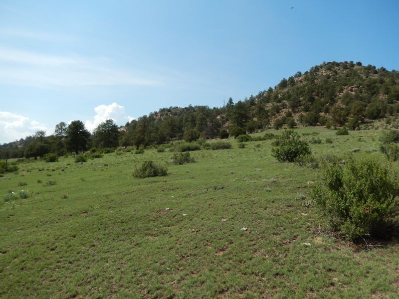 100 Acre Equestrian Ranch : Florissant : Teller County : Colorado