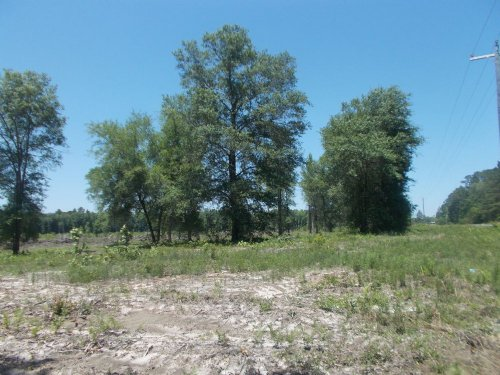 30 Acres Double Road Front : Jesup : Wayne County : Georgia