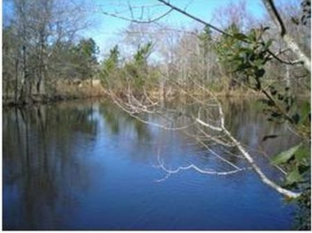 81+/- Acres With Pond Reduced : Claxton : Evans County : Georgia
