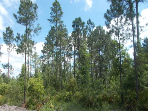 42.29 Acres Recreation Or Homesite : Mt Pleasant : Wayne County : Georgia