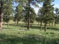 35 Acres With Stream And Barn
