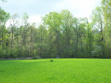 145 Acres Of Highly Managed Timber : Shepardsville : Dallas County : Alabama