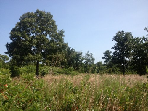 Cheap Land W/ Tons Of Road Frontage : Bethune : Kershaw County : South Carolina