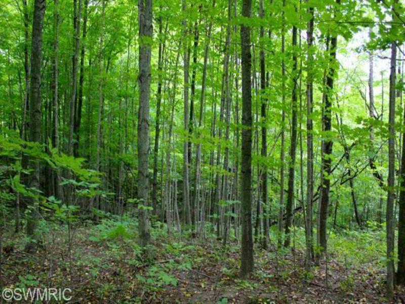 Wooded Acreage : Allegan : Allegan County : Michigan