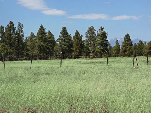 Antelope Park Ranch Flagstaff, Az : Munds Park : Coconino County : Arizona