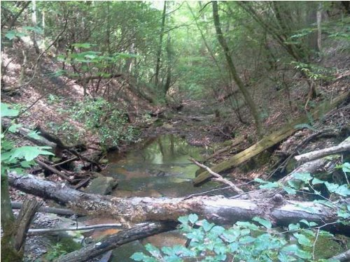 Owner Financing 20+/- Acres : South Pittsburg : Marion County : Tennessee