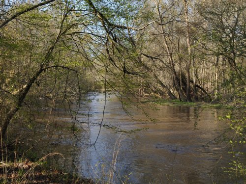 39 Acres Lynches River Road : Lamar : Darlington County : South Carolina