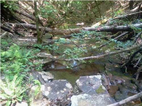 54.8+/- Brow Lot With Creek : South Pittsburg : Anderson County : Tennessee
