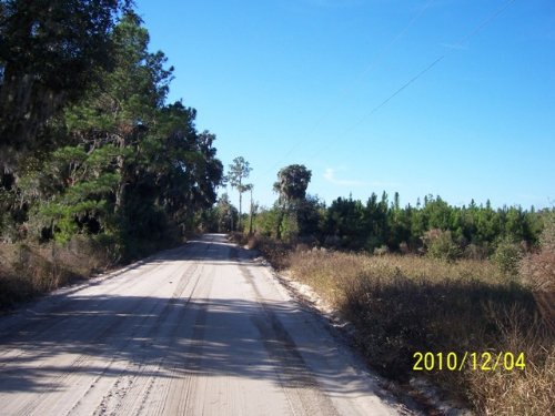 83+/- Ac. Next To State Owned Land : Jasper : Hamilton County : Florida