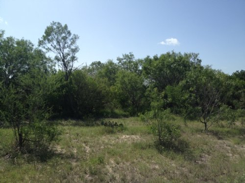 10.72 Acres In South Texas : George West : Live Oak County : Texas