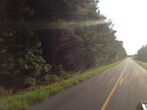 48.2 +/- Acres In Banks : Banks : Pike County : Alabama
