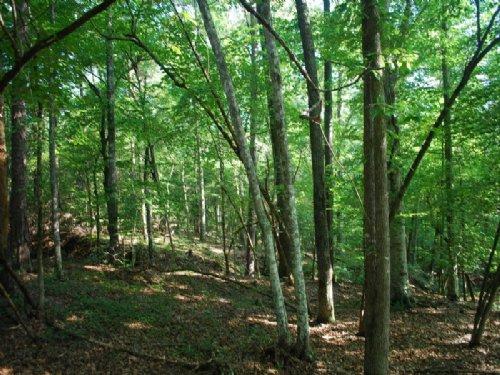 39 Acre Recreational Tract Near Bro : Union : South Carolina