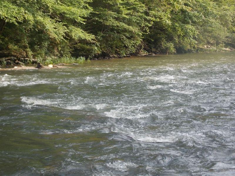 Hatchet Creek Hunting And Timber : Rockford : Coosa County : Alabama