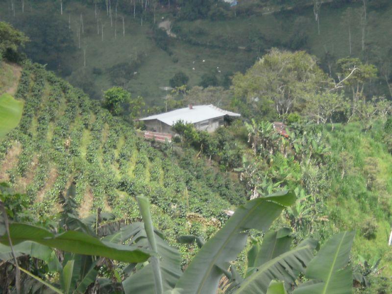 Working Farm, 168 Ac, Sugar Cane : La Suiza De Turrialba : Costa Rica