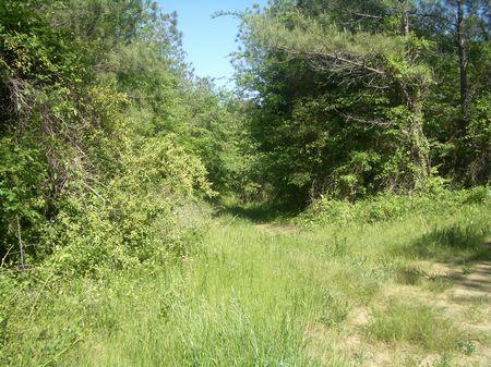 148 Acres On Baxter Road : Resaca : Gordon County : Georgia