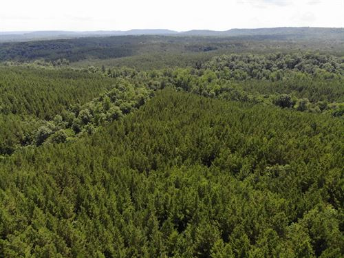 25-015 Clarkton Creek : Hanceville : Cullman County : Alabama