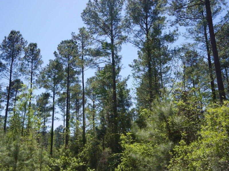 90+/- Acres Brooklet Hideaway : Brooklet : Bulloch County : Georgia