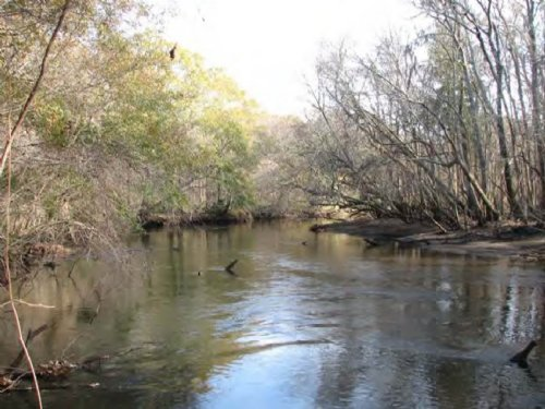 Great Ogeechee River Preserve : Savannah : Chatham County : Georgia