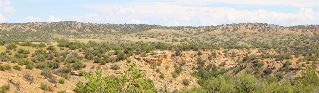 Arizona Wilderness Ranch $237 Mo : Saint Johns : Apache County : Arizona