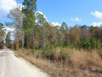 36 Acres-lot 5 Tall Pines : Starke : Bradford County : Florida