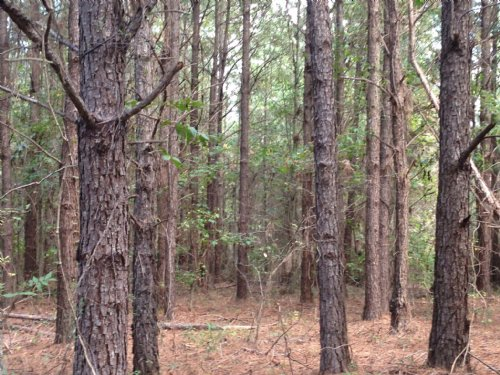 17 +/- Ac Near Lake Simmie : Brundidge : Pike County : Alabama