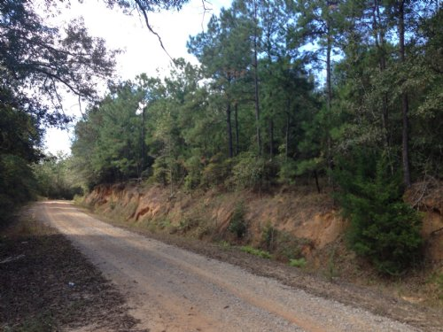 16 +/- Ac Near Lake Simmie : Brundidge : Pike County : Alabama