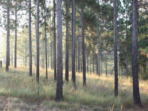 Quail Harvest Plantation : Sylvester : Worth County : Georgia