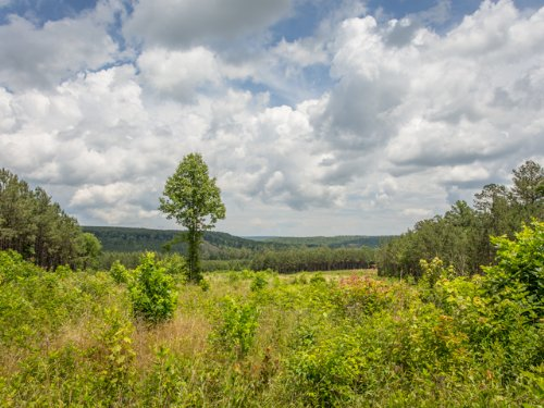 Wf: Excellent Land For Hobby Farm : Signal Mountain : Sequatchie County : Tennessee